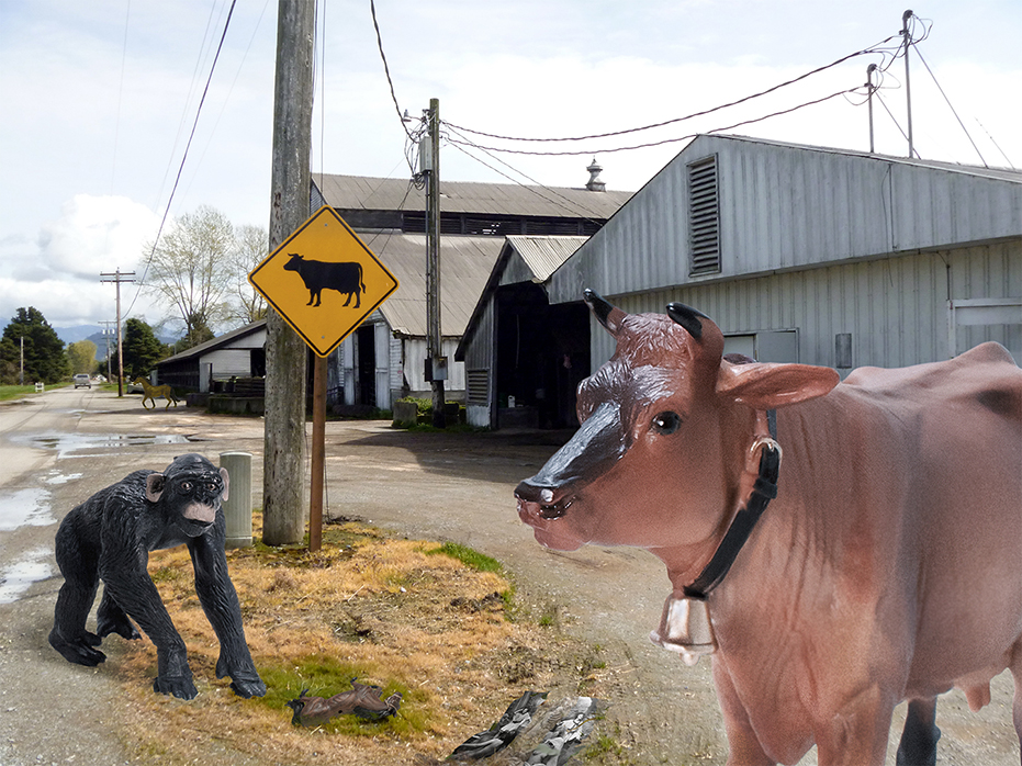 Cow & Monkey with Sign